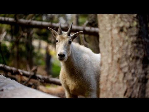 Washington - Enchantments - Canon 5D Mark II - Glidecam HD 4000